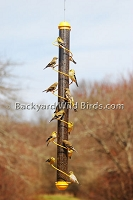 Spiral Tall Goldfinch Bird Feeder