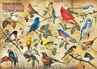Backyard Popular Birds Puzzle