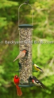 Big Tube Bird Feeder Spruce