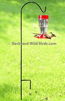 Hummingbird Feeder With Pole