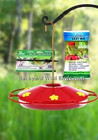 Hummingbird Feeder Starter Kit