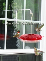 Popular Window Hummingbird Feeder