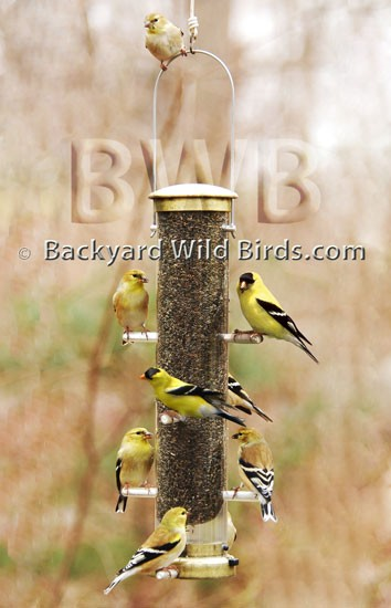 Goldfinch Thistle Tube Bird Feeder